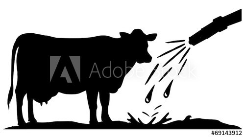 wash cow